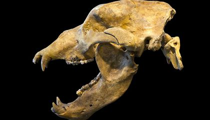 Ice Age Humans Likely Played Major Role in Cave Bears' Extinction