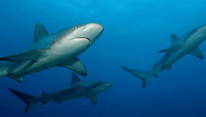 Respect: Sharks are Older than Trees