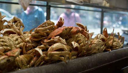 Warming Oceans Could Make These Seafood Favorites Toxic