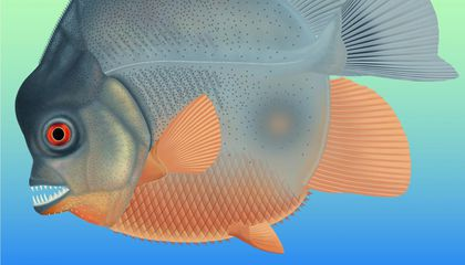 This Little Fish Was Nomming on Flesh 150 Million Years Ago