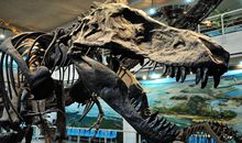 Ten Chinese Museums Where You Can See a Dinosaur Fossil Up Close