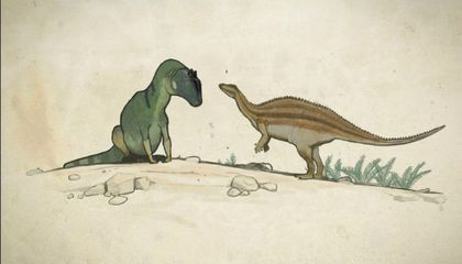 How I Learned to Stop Worrying and Love Dinosaurian Oddities