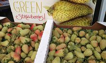 Green strawberries