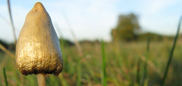 """Could """"Magic"""" Mushrooms Be Used to Treat Anxiety and"""