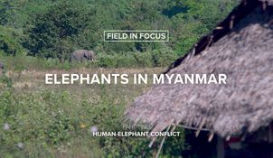 Humans and elephants are increasingly living in the same places, but science can help prevent conflict between them. Watch part two of our new series—Field in Focus.