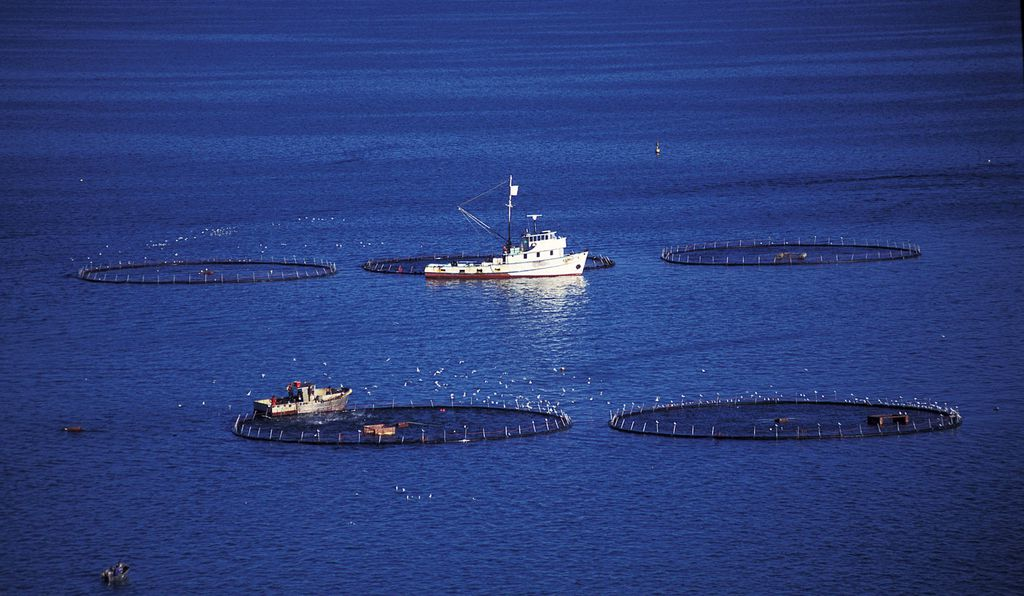 The waters off Port Lincoln are dotted with roughly 100 pontoons, operated by 12 companies, where tuna are fattened up before they're harvested.
