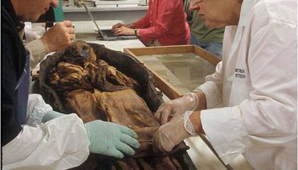 The 'Boy in the Iron Coffin' Comes Home to the Natural History Museum