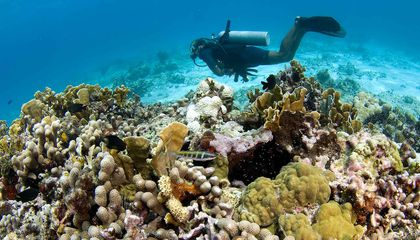 In Mexico, Dive Tourism Is Worth as Much as Fishing