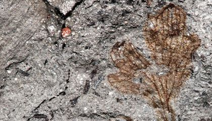 This Could Be the Oldest Flowering Plant Ever Found in North America