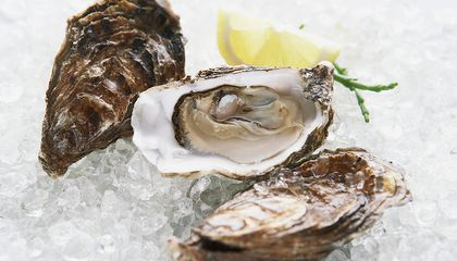 Let Oysters Get Sick to Clean Up the Chesapeake
