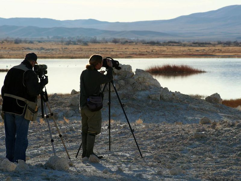 Christmas Bird Count Counters