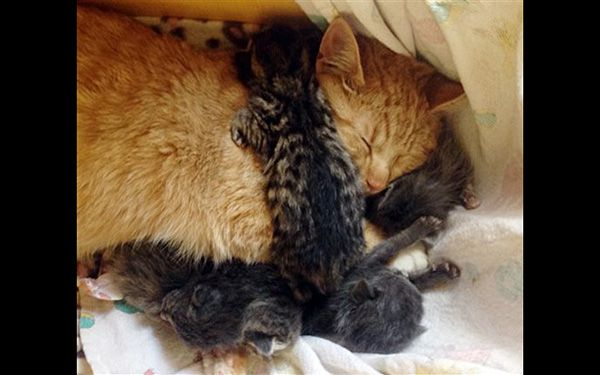 Male cat takes on role of mom
