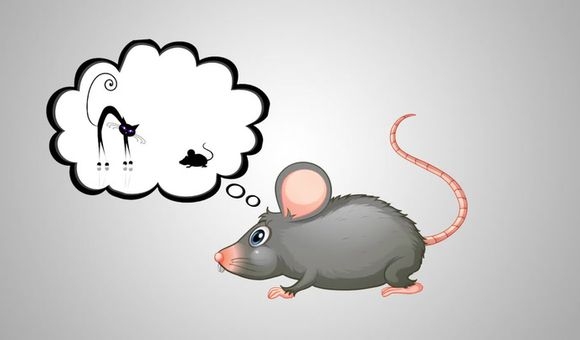 Preview thumbnail for video'Ask Smithsonian: Can Cats Really Make Rats Into Zombies?