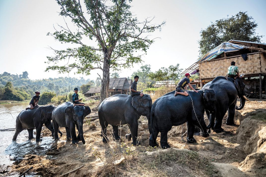 A group of elephants at the Myaing Hay Wun Camp in Myanmar.
