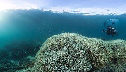 Massive Bleaching Event Hits the Great Barrier Reef