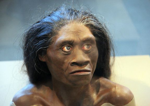 A female H. floresiensis recreation from the Smithsonian Museum of Natural History.