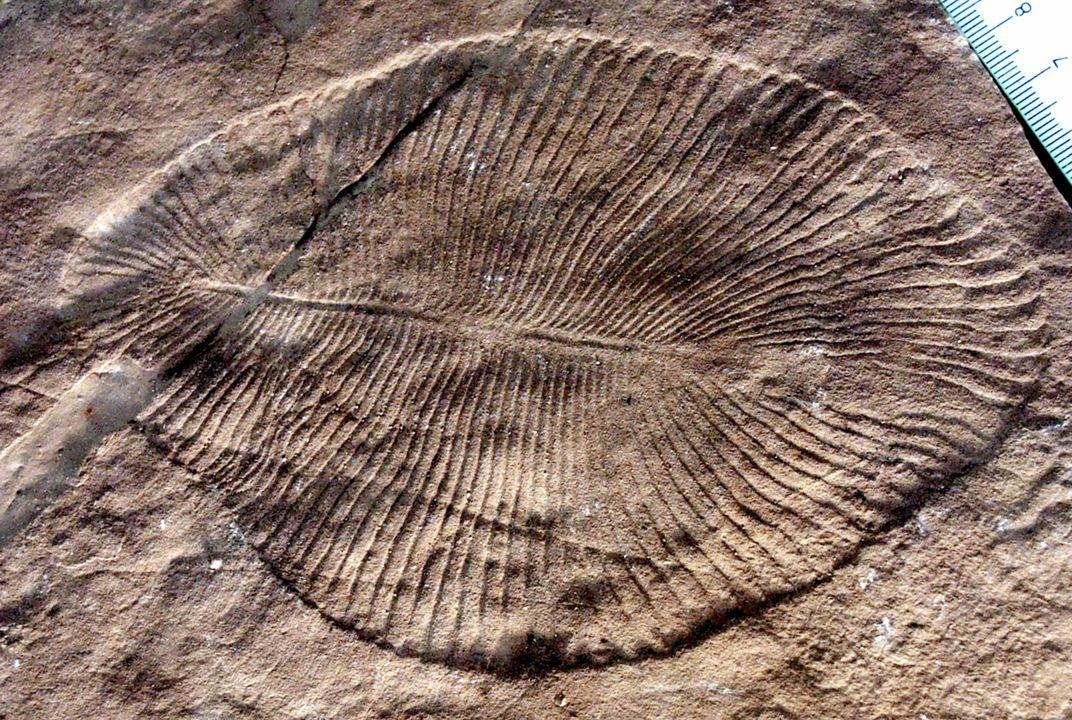 The World's Earliest Known Animal May Have Been a Blob-Like Undersea Creature | Smart News | Smithsonian