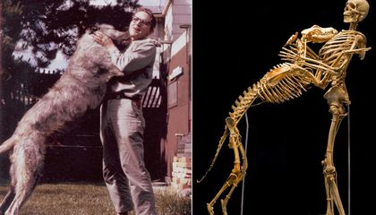 The Scientist Grover Krantz Risked It All. . .Chasing Bigfoot