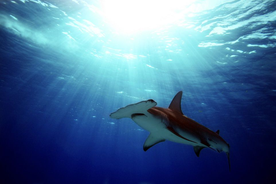 Sharks And Humans A Love Hate Story Science Smithsonian