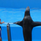 Lets be friends! - Sea lions show in Seaworld, Orlando, Florida