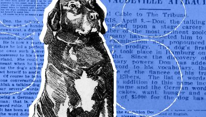 When Don the Talking Dog Took the Nation by Storm