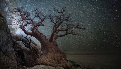 Stunning Photos of Africa's Oldest Trees, Framed by Starlight