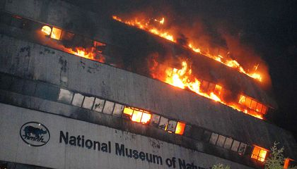 Fire Devastates New Delhi's National Museum of Natural History