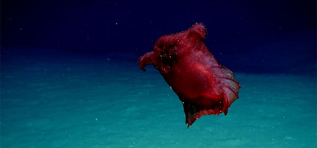 Caption:  A Rare Sighting of the 'Headless Chicken Monster'