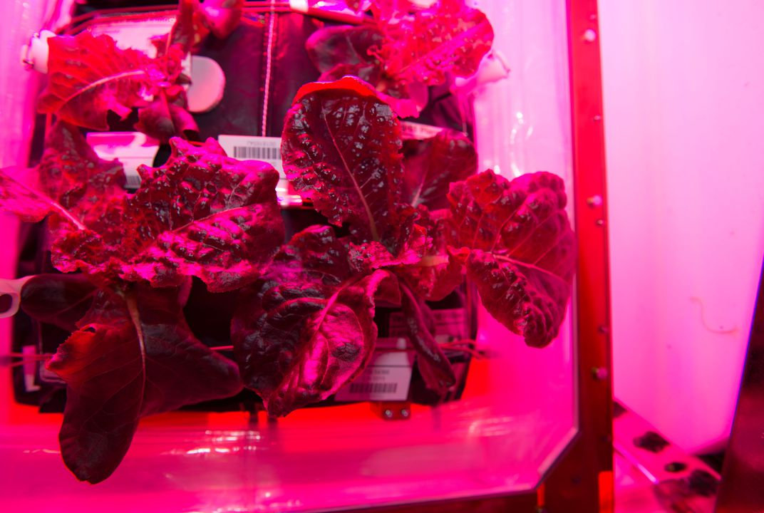 Something new for space travelers: fresh salad!