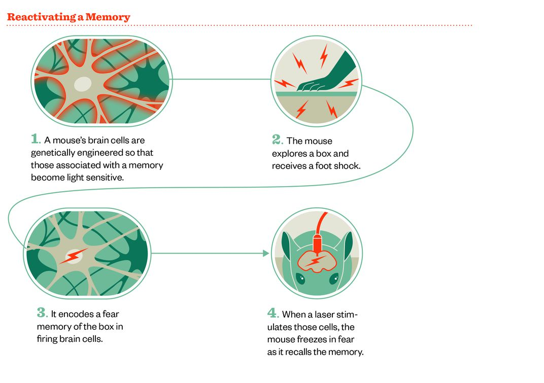 Meet the Two Scientists Who Implanted a False Memory Into a