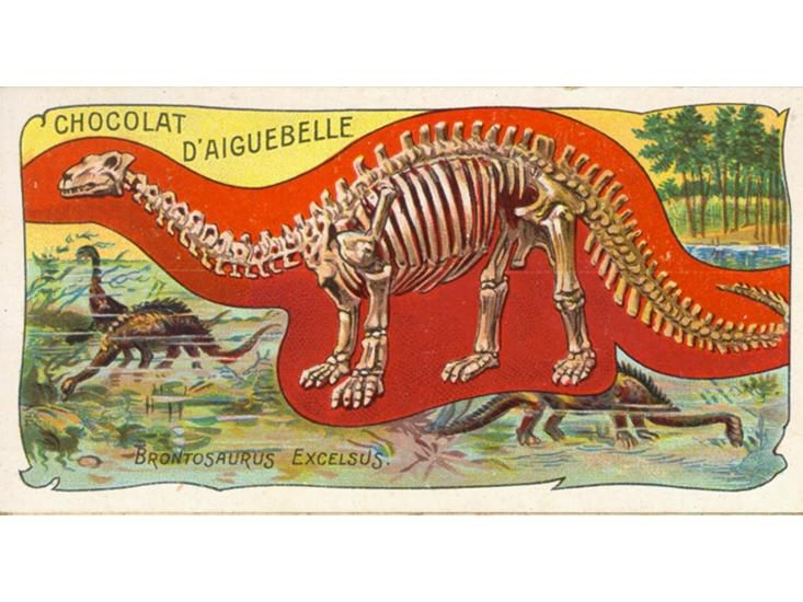 elias bedside peacock blue an oldschool drawing of brontosaurus excelsus graces 1900s trading card from french chocolate manufacturer public domain via alphagalileo search everything smithsonian learning lab