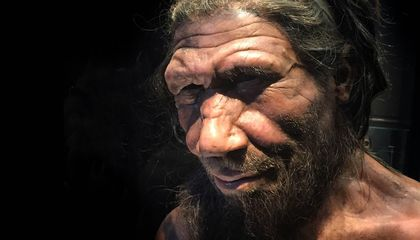 How Do Scientists Identify New Species? For Neanderthals, It Was All About Timing and Luck