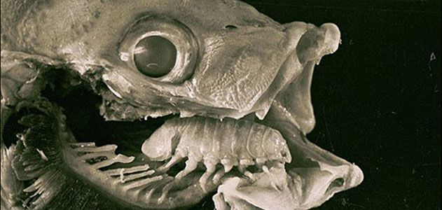 Top 10 Real-Life Body Snatchers   Science   Smithsonian