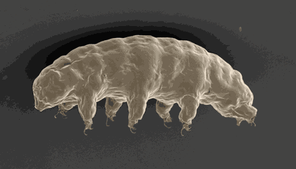 Water Bear Genes Could Help Protect Space Explorers From Radiation