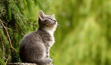 Cats Have Actually Grown Larger Over Time—Unlike Most Domesticated Species