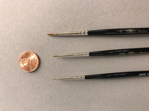 three paint brushes and a penny.
