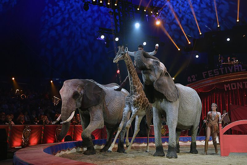 Image result for circus animals