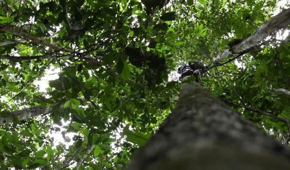 Preview thumbnail for video'Discovering New Species in the Amazon