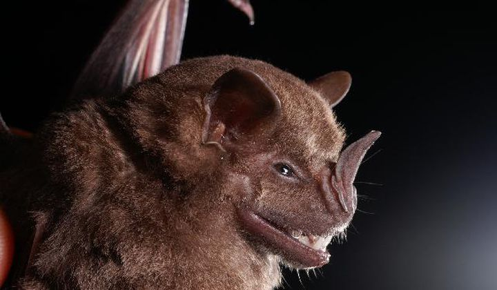 Bat Guano Reveals Thousands of Years of Climate