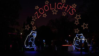 Catch the Animals at Night at ZooLights!