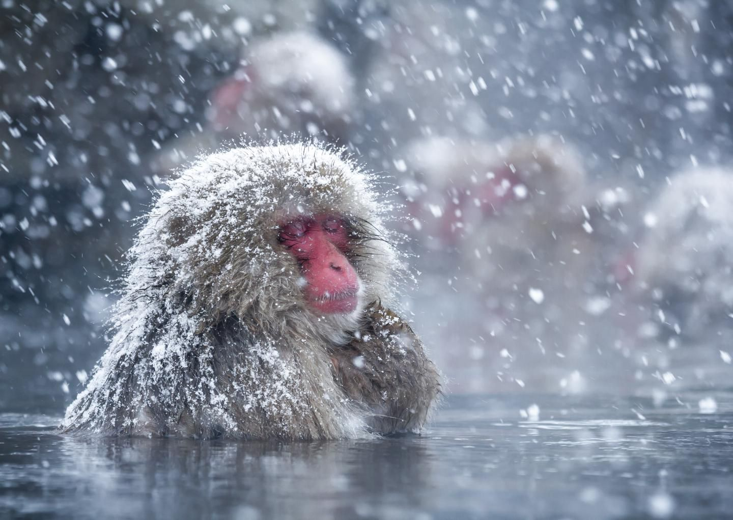 Chilling Out in Hot Springs May Help Japan's Snow Monkeys Reduce Stress |  Smart News | Smithsonian Magazine