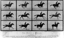 How a 19th-Century Photographer Made the First 'GIF' of a Galloping Horse