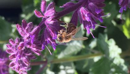 'Safe' Levels of Pesticide Still Hamper Bees' Memory and Ability to Learn