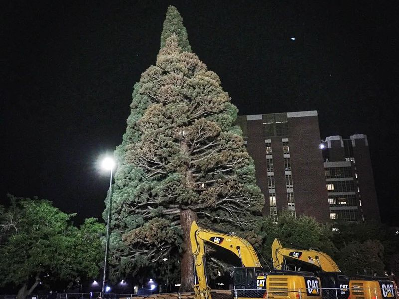 Watch a 100-foot-tall Giant Sequoia Get Transplanted in Boise ...