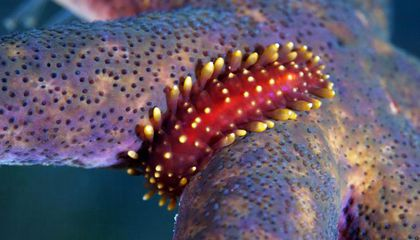 14 Fun Facts About Marine Bristle Worms