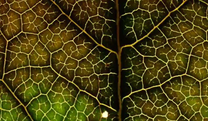 Watch Leaves Change Color in a Matter of Seconds