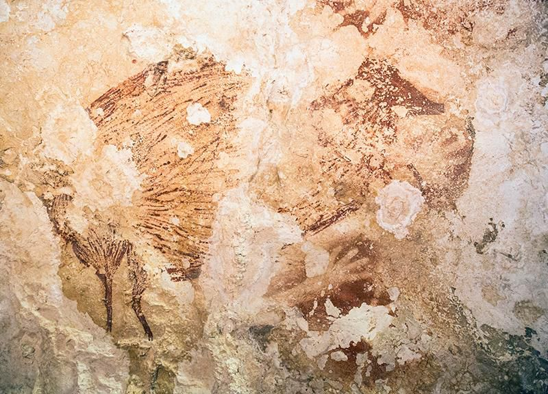 Caveman Art : Rock art of ages: indonesian cave paintings are 40 000 years old