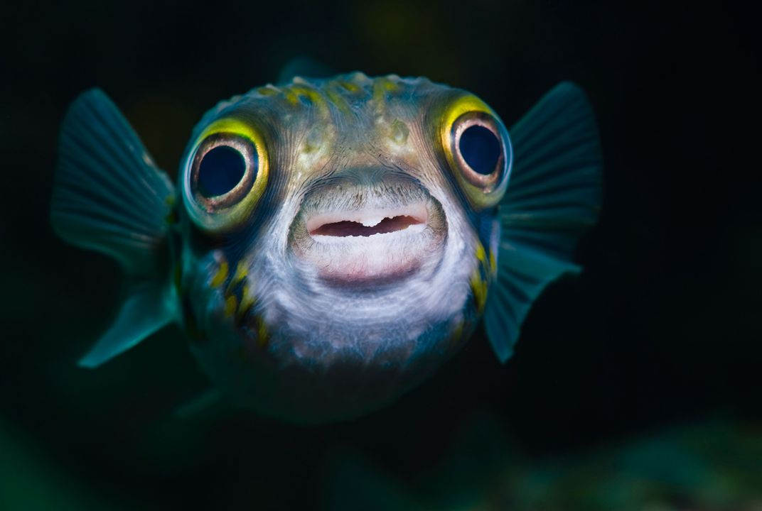 It S Official Fish Feel Pain Science Smithsonian Magazine