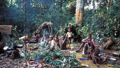 Displaced Pygmies
