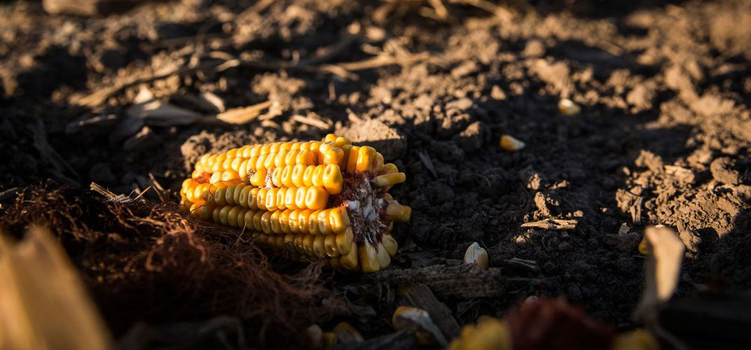 Caption: The Corn Belt Has Lost a Third of Its Topsoil